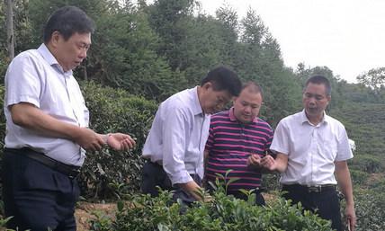 黄荣森副主席到苍梧县六堡镇调研